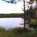 Girutiškio gamtinis rezervatas