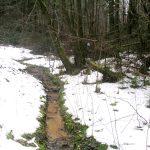 Kalnų gamtinis rezervatas