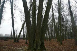 Medžių lizdas.